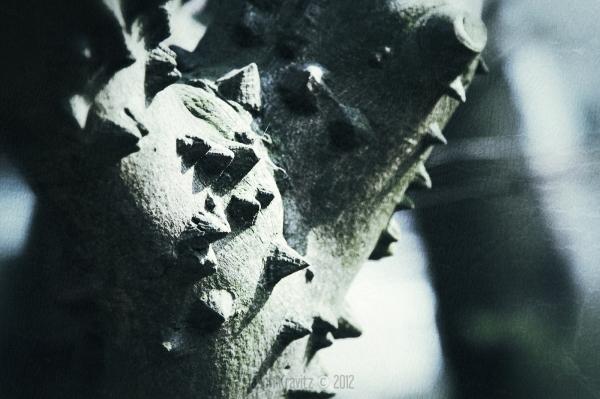 thorny tree