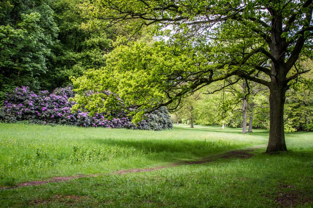 belgium meadow