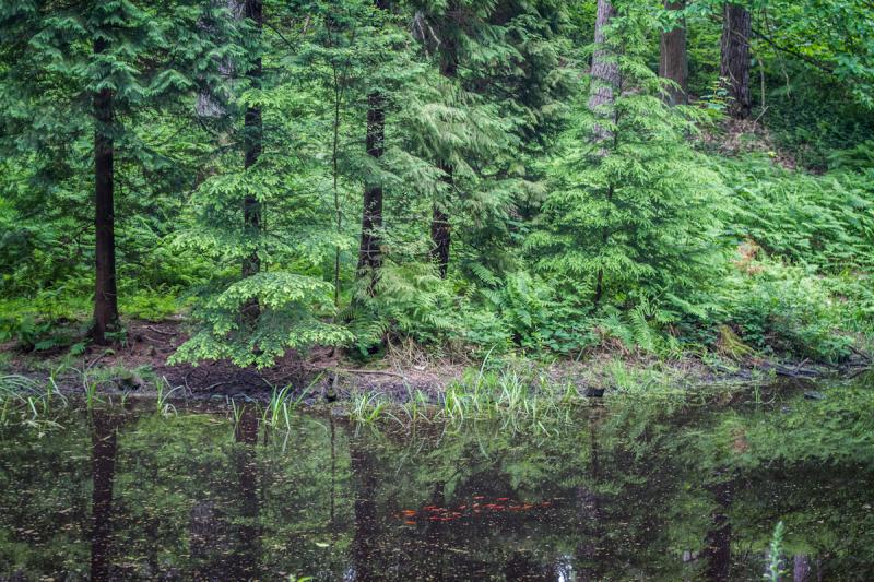 on Belgian pond