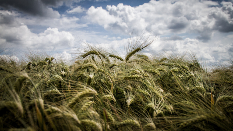 wheatcast call for clouds