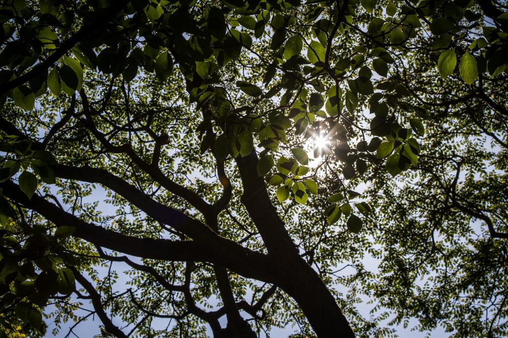 tree light ray
