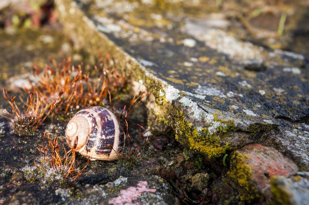 texture snail
