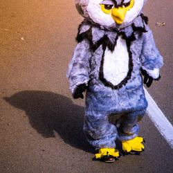 owl man overijse