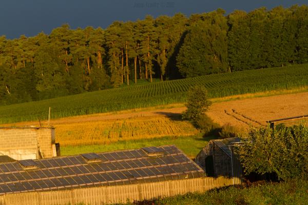 farm golden