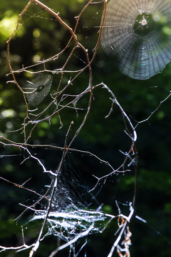 forest tree spider web