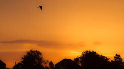 dove sunrise