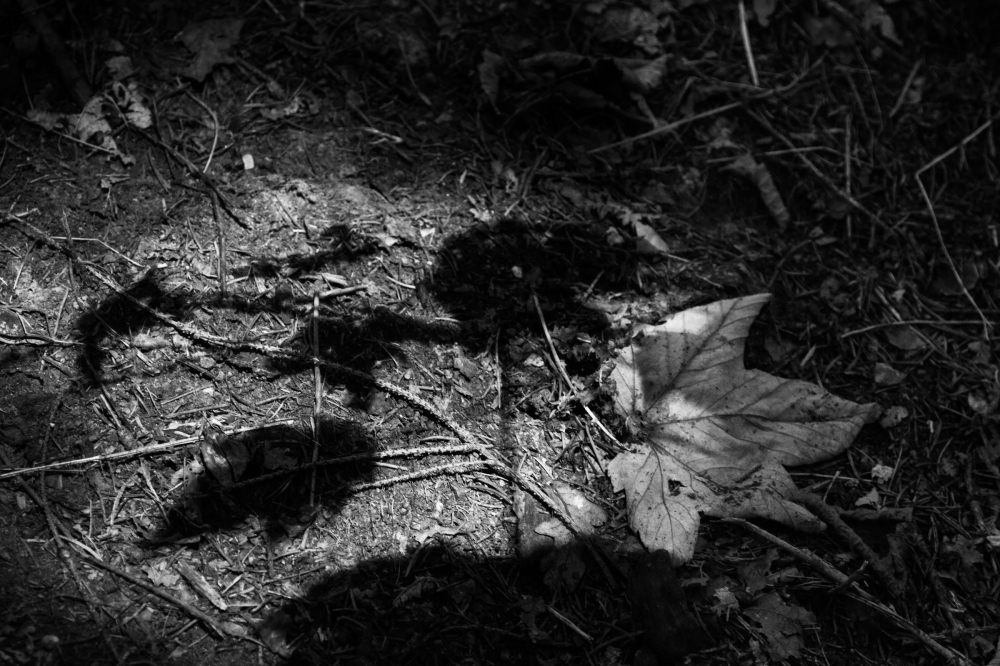 autumn leaf shadow
