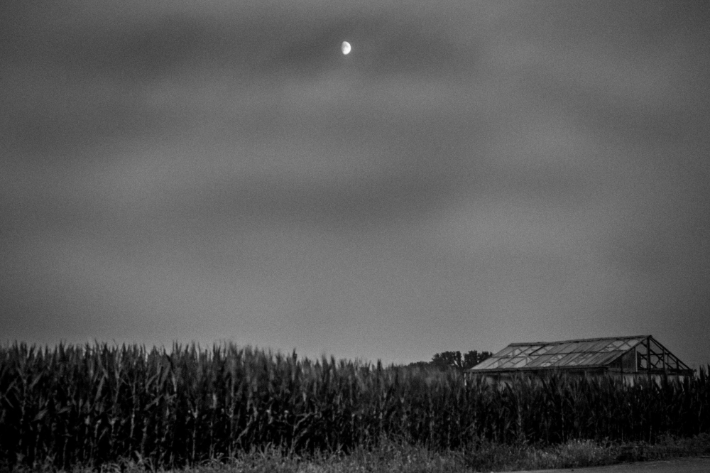 cornfield by moonlight