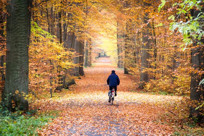 Autumn Ride