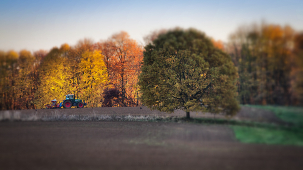 autumn tilt-shift