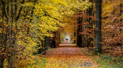 mini autumn