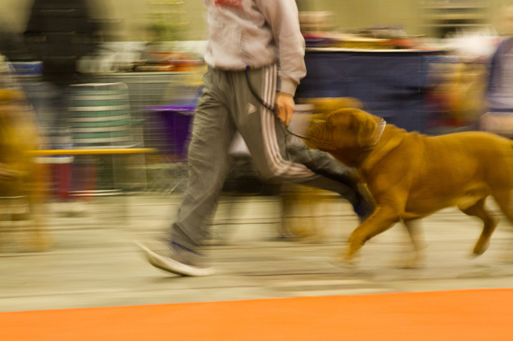 brussels dog show 2012