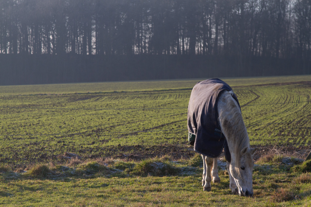 fata the horse