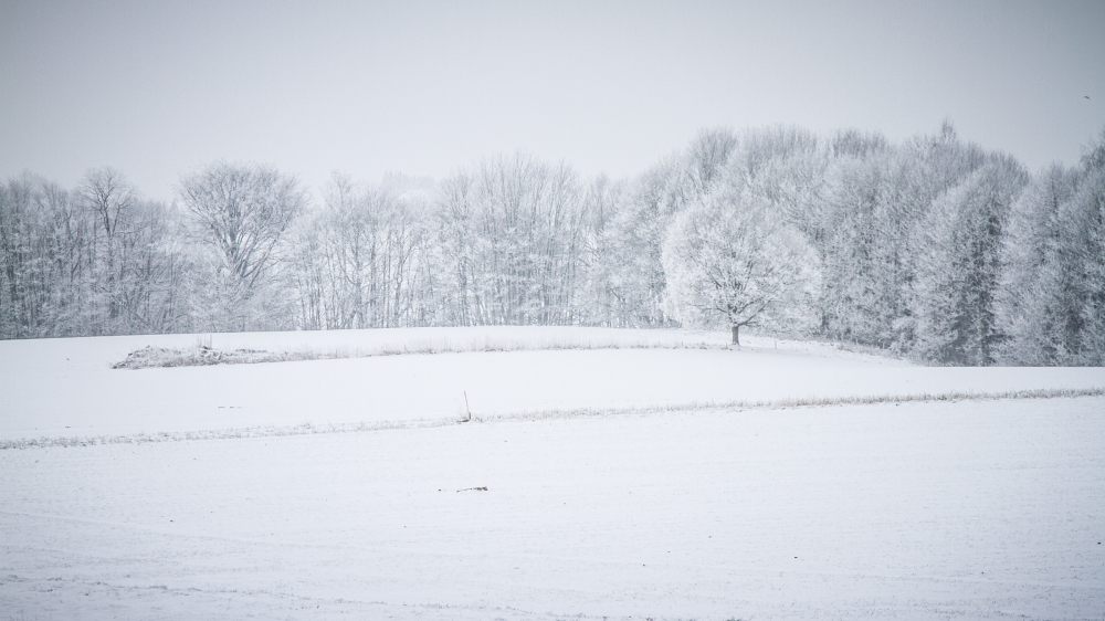 Belgium snow field tree