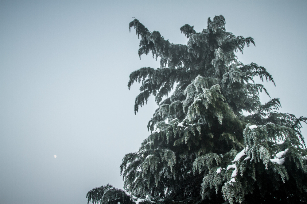 moon snow evergreen