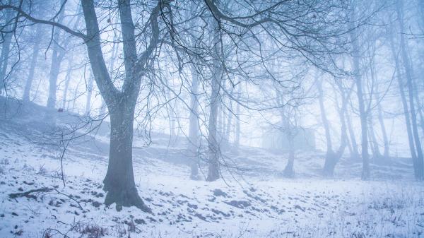 fog shack woods
