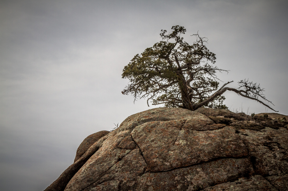 tree rock mountain