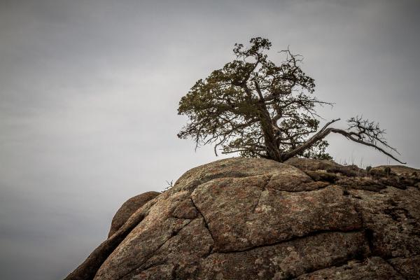 tree on rock mountain