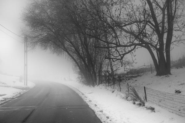 fog snow tree