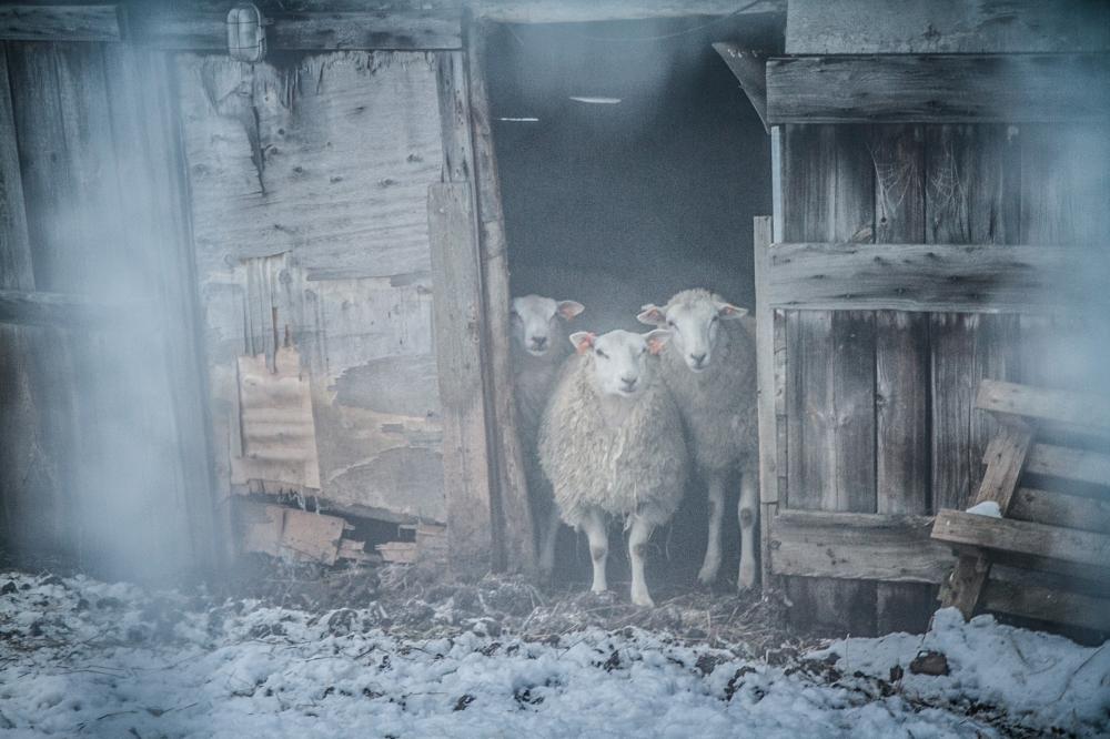 lamb soft filter