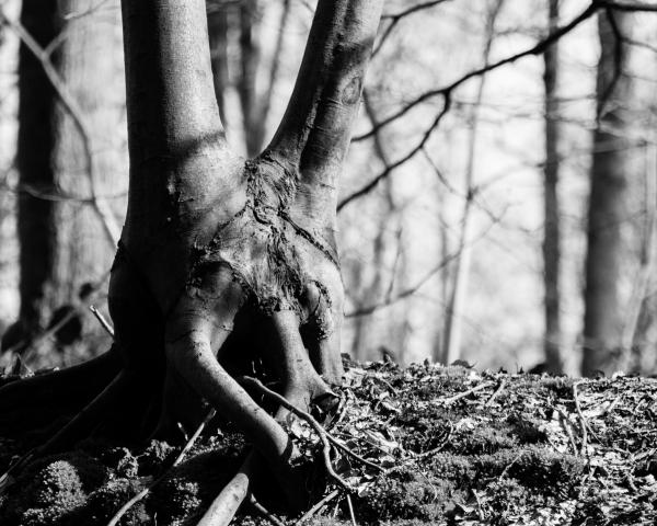 tree alien