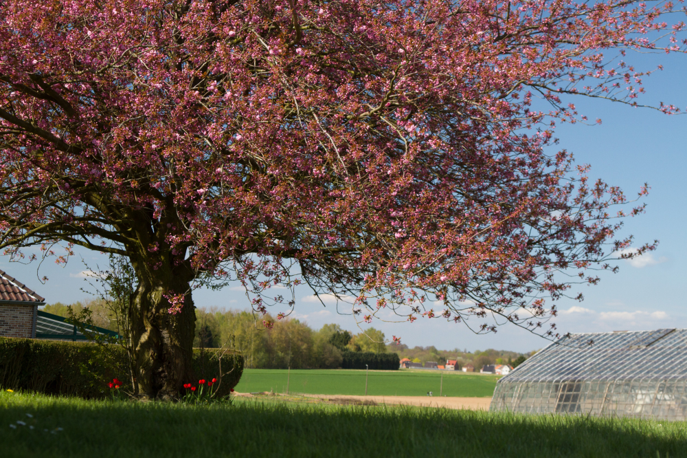 belgian springtime