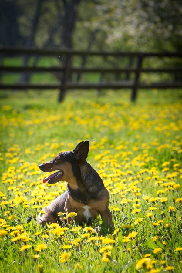 printemps avec chien