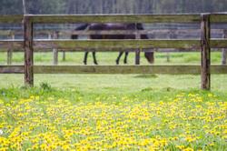 horse spring