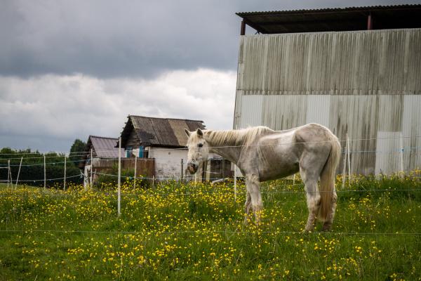 horse rescue belgium