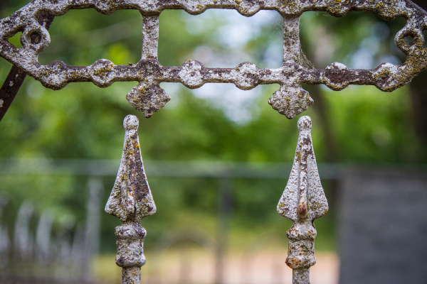 lichen coated fence tips