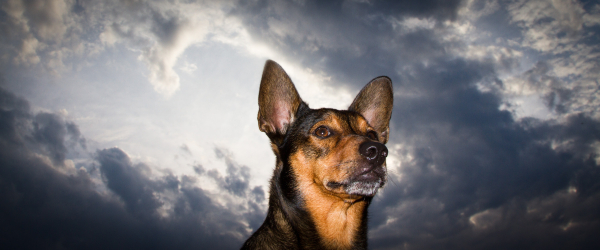 dog and storm clouds