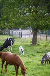 livestock family