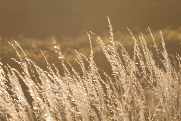 backlit field