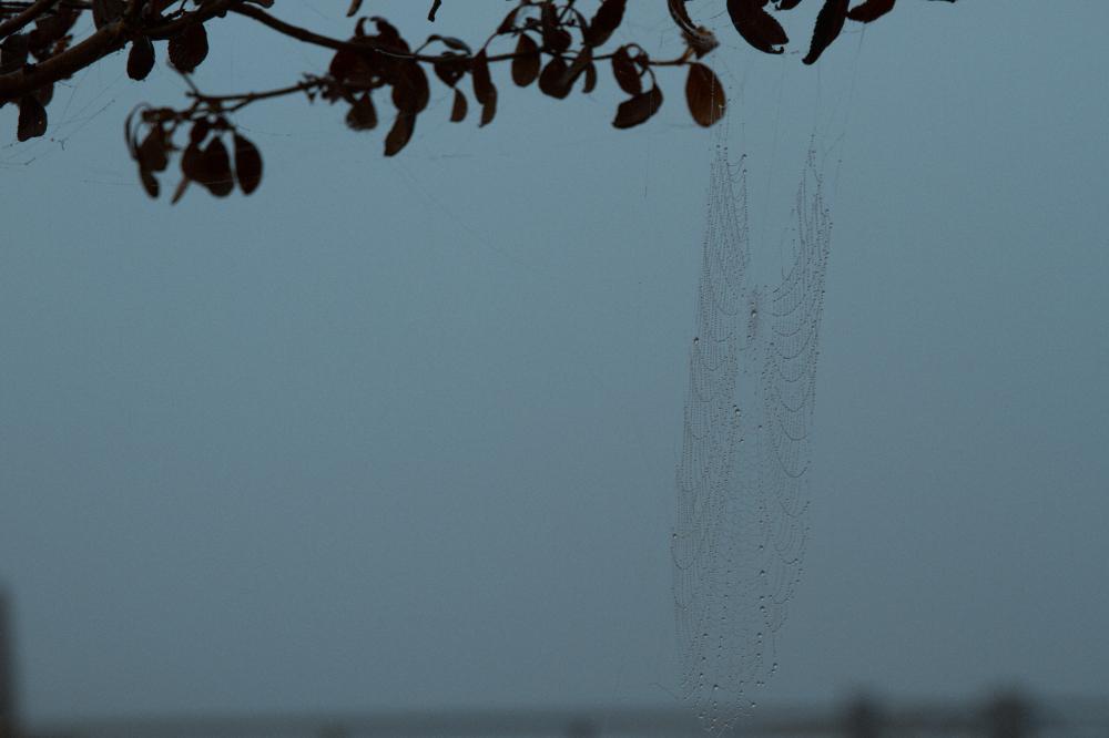 web hanging