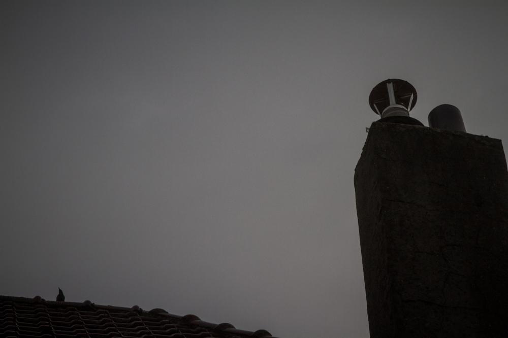 roof bird