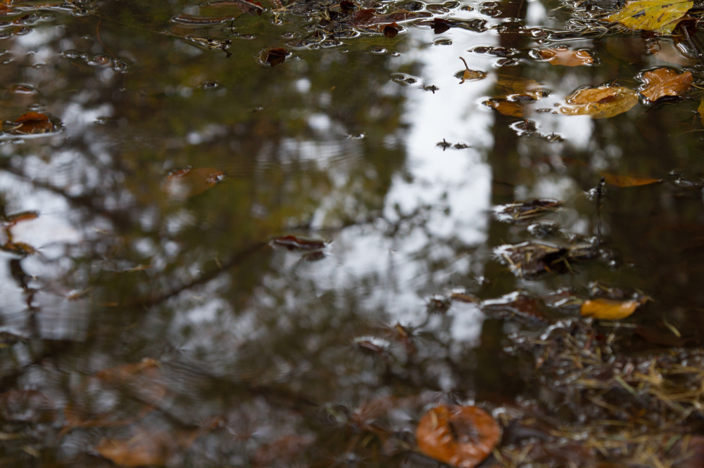 forest rain reflection