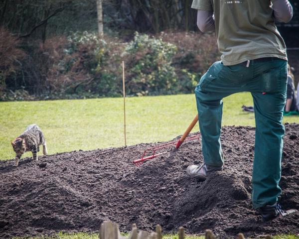 feline gardening tips