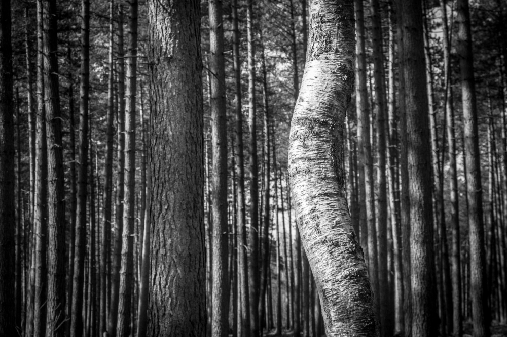 tree bend