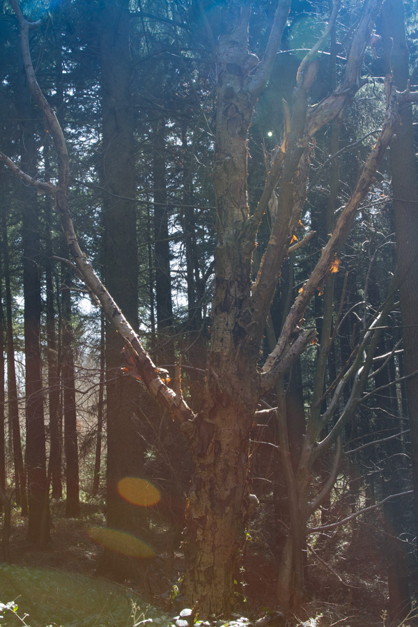 lens flare forest