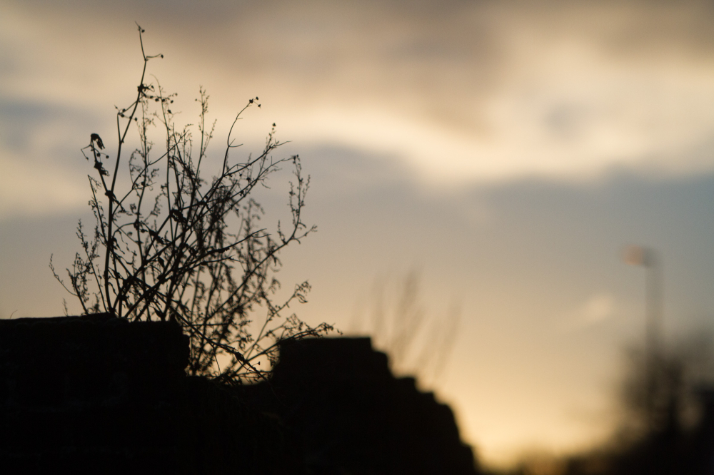 scrub tree silhouette