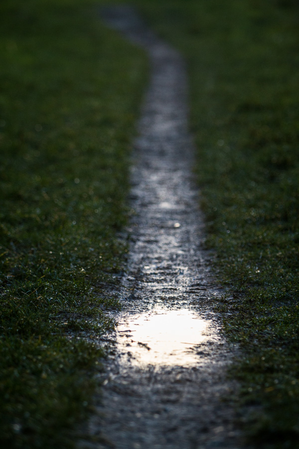 the puddle path
