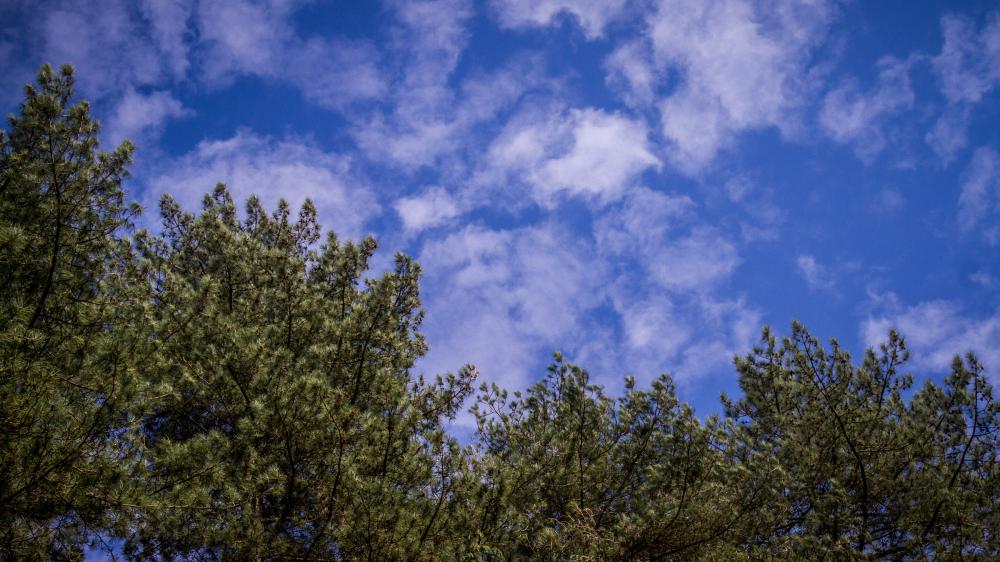 tree cloud sky