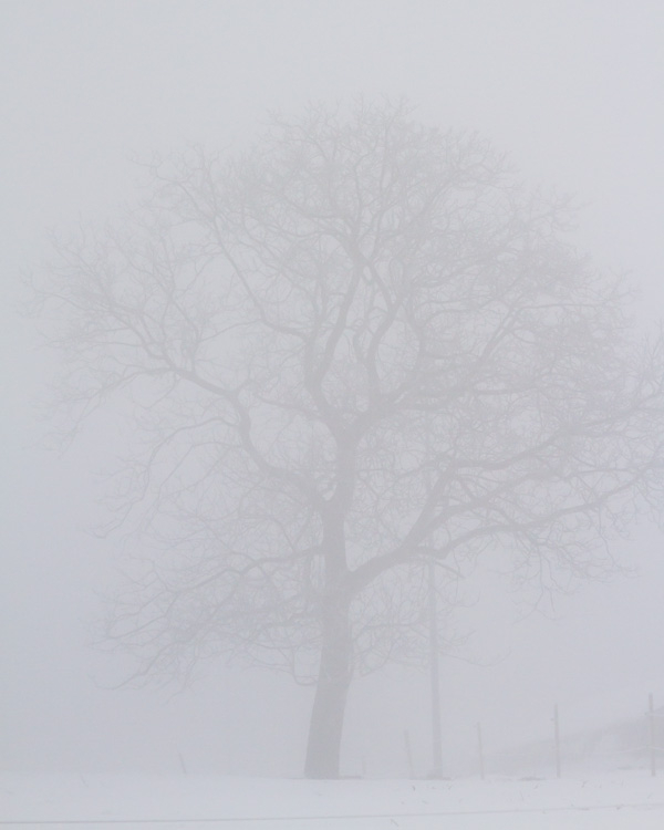 winter branches in the fog