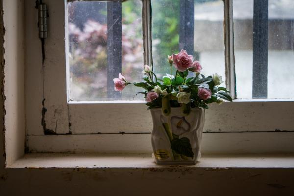 roses for god