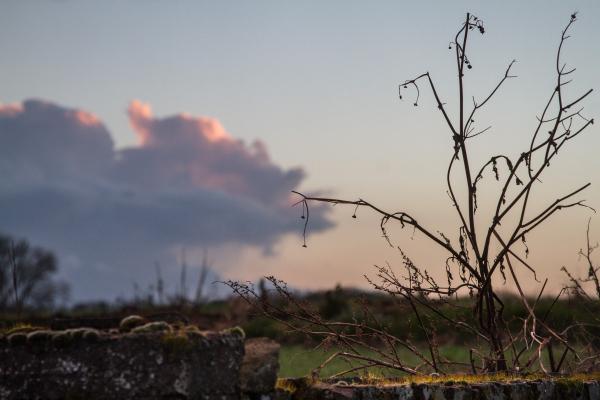 cloud plant