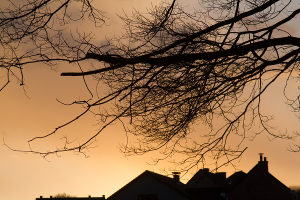branches on your rooftops