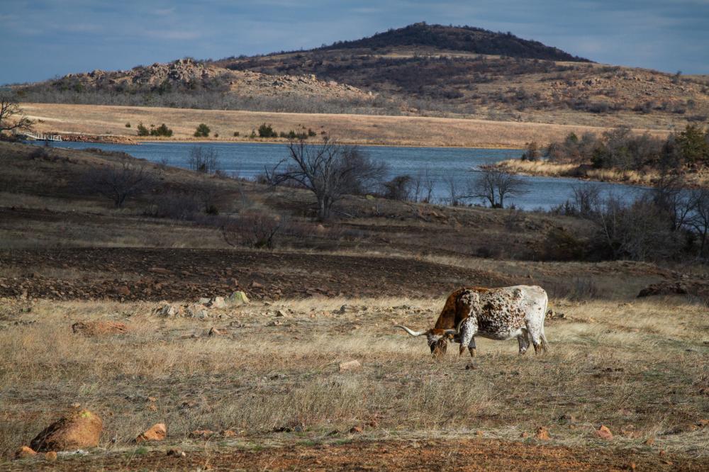 longhorn wichita mountain wildlife refuge
