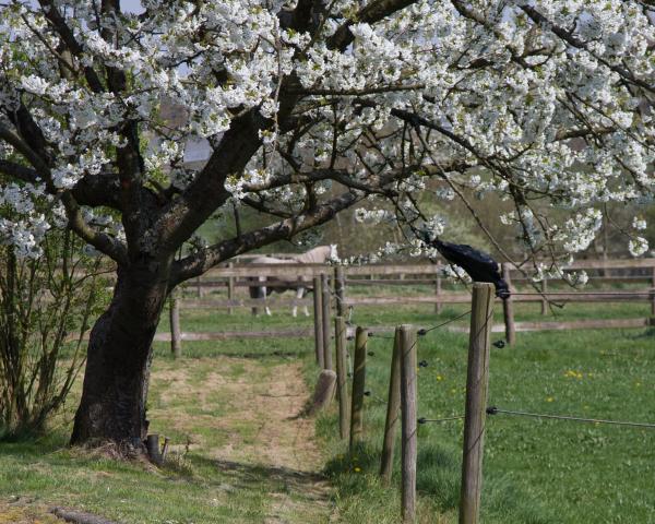 spring horse stallion