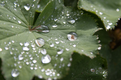 dew drop macro