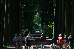 forest dog walk